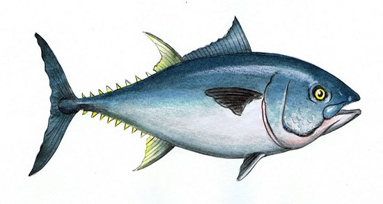 تعبیر خواب ماهی بزرگ و گرفتن ماهی از رودخانه و دیدن زایمان ماهی
